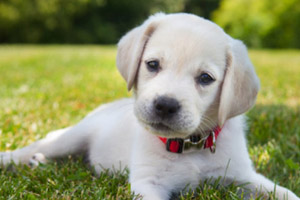 Tips for care a new puppy