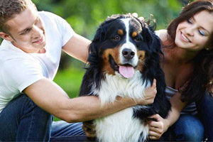 How To Keep Your Pets Healthy & Happy Around The Year